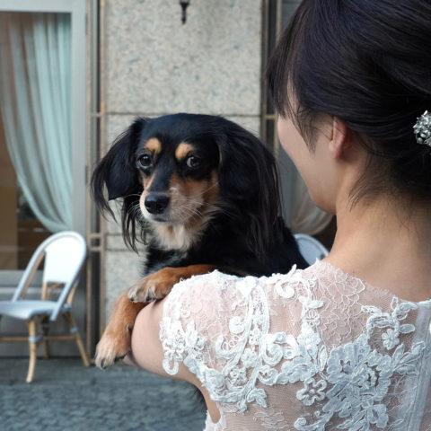 アニバーサリーアン恵比寿 ペットウエディング 新婦 愛犬